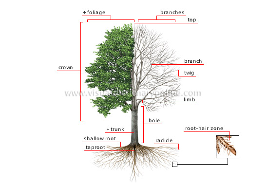 Structure Tree on Gardening Kids Planting Seeds Free Printable
