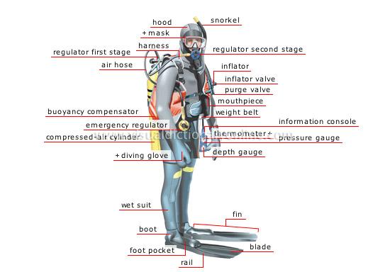 [Image: scuba-diver.jpg]