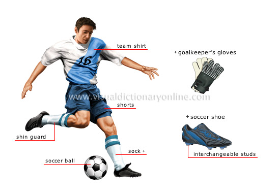 body energy systems used playing touch football Heights college touch football fitness components coordination is the body's ability to sense with the body the ability to transfer energy into.
