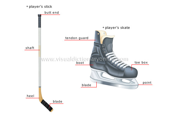 ice hockey player [3]
